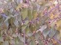 brestovec-1-.jpg [1024 x 768]