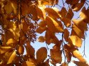 zlaty-buk-18-.jpg [1024 x 768]