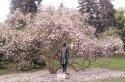 Petřínská magnolie, asi ta nejznámější, nepřehlédne ji opravdu nikdo.